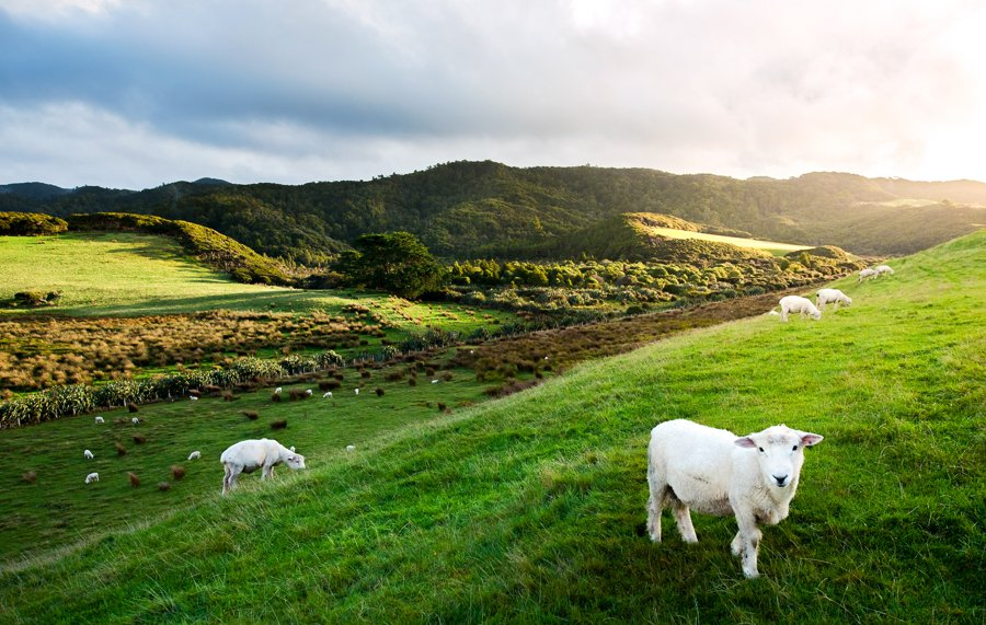 How To Get a New Zealand Working Holiday Visa: A Step-By-Step Guide